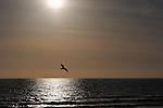 A lone seagull off Newport Beach, CA.