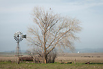 Aermotor windmill and bare tree with hawk, Salt Spring Valley, Calif.