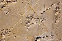 Europe/Europe/France/Midi-Pyrénées/46/Lot/Crayssac: La plage aux Ptérosaures - reptiles volants - qui ont laissé leurs empreintes dans le vase de la plage