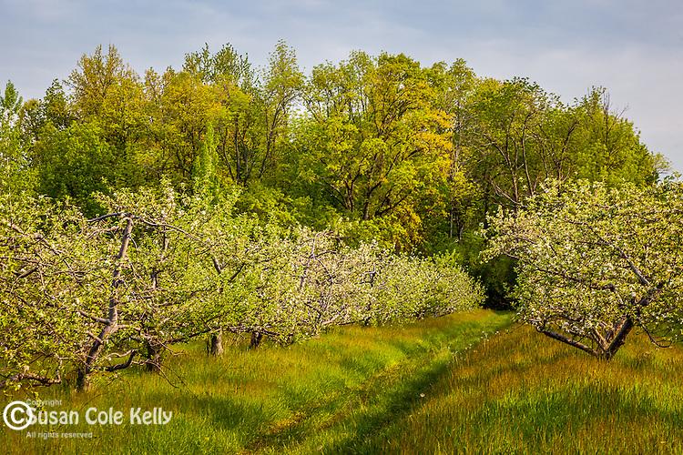 Shelburne Orchards, Shelburne, VT