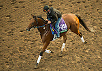 ARCADIA, CA - NOV 01: Twilight Eclipse, owned by West Point Thoroughbreds, Inc. and trained by Thomas Albertrani, exercises in preparation for the Breeders' Cup Longines Turf at Santa Anita Park on November 1, 2016 in Arcadia, California. (Photo by Douglas DeFelice/Eclipse Sportswire/Breeders Cup)