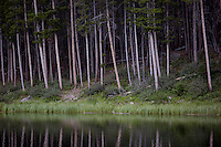 Trees stand above Greenough Lake in Custer National Forest in southeastern Montana, USA.