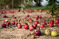 Green Meadows Farm and Harvest Time Orchards