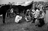 11.2010 Pushkar (Rajasthan)<br /> <br /> In the camp of the cattle fair near water basin.<br /> <br /> Sur le camp aux bestiaux près du bassin d'eau.