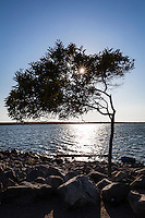 The sun bursts through the leaves of the wind-blown tree at San Leandro Marina Park while in the water, a timber floats to the left and a barrel floats to its right.