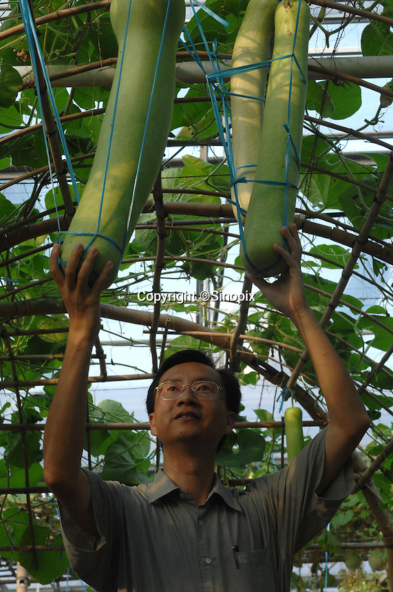 Space gourds that are sold commercially in Japan is held by Dr Zhigang Lo at the Chinese Academy of Sciences Shenzhen Space Park. The Chinese Academy of Sciences Shenzhen Space Park that has examples of fruits and vegetables that have been cultivated from seeds that were sent to outer space.  Chinese scientists claim that vegetables and fruit cultivated from the space seeds are larger, more nutritious and safe to eat...PHOTO BY SINOPIX