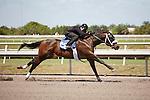 #156Fasig-Tipton Florida Sale,Under Tack Show. Palm Meadows Florida 03-23-2012