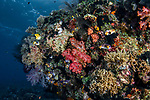 Colorful Reef Misool, Indonesia