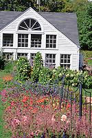 House and garden with Agastache 'Acapulco Orange', Thunbergia Sunny Yellow Star climbing vine, obelisks, hydrangea, gomphrena, annuals, dahlia ecstasy, many colors