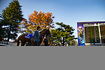 FUCHU,JAPAN-NOVEMBER 26: Cheval Grand is walking on the parade ring before the Japan Cup at Tokyo Racecourse on Nobember 26,2017 in Fuchu,Tokyo,Japan (Photo by Kaz Ishida/Eclipse Sportswire/Getty Images)