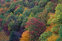 Northern hardwood forest<br /> Youghiogheny River Gorge<br /> Ohiopyle State Park<br /> Fayette County,  Pennsylvania