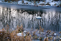 Pair of Swans bird winter on river water in snow