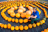 BNPS.co.uk (01202 558833)<br /> Pic: MaxWillcock/BNPS<br /> <br /> Pumpkin Harvest.<br /> <br /> Pictured: Gardener Clem Ransford inspecting the pumpkins.<br /> <br /> An autumn harvest of squashes and pumpkins has been laid out in a spiral for visitors at Forde Abbey House & Gardens in Dorset.<br /> <br /> Forde Abbey is a former Cistercian monastery dating back to the early 12th century.