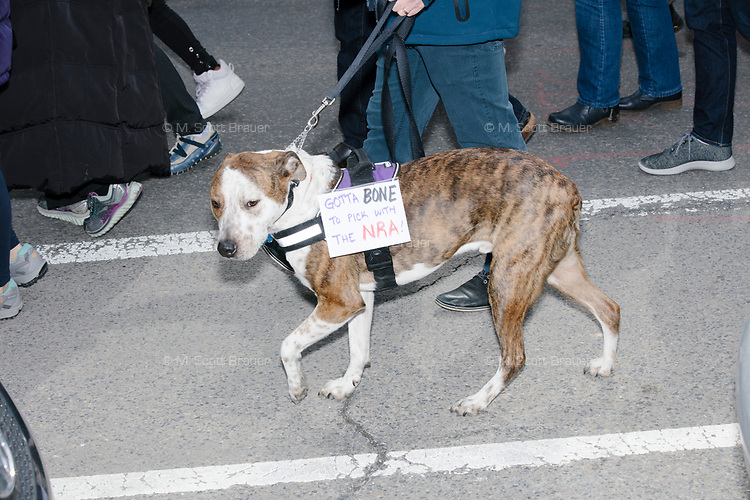 """A dog wears a sign reading """"Gotta bone to pick with the NRA!"""" in the March For Our Lives protest, walking from Roxbury Crossing to Boston Common, in Boston, Massachusetts, USA, on Sat., March 24, 2018, in response to recent school gun violence."""