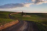Road passing over green rolling hills leading into horizon, Eastern Washington, WA, USA.