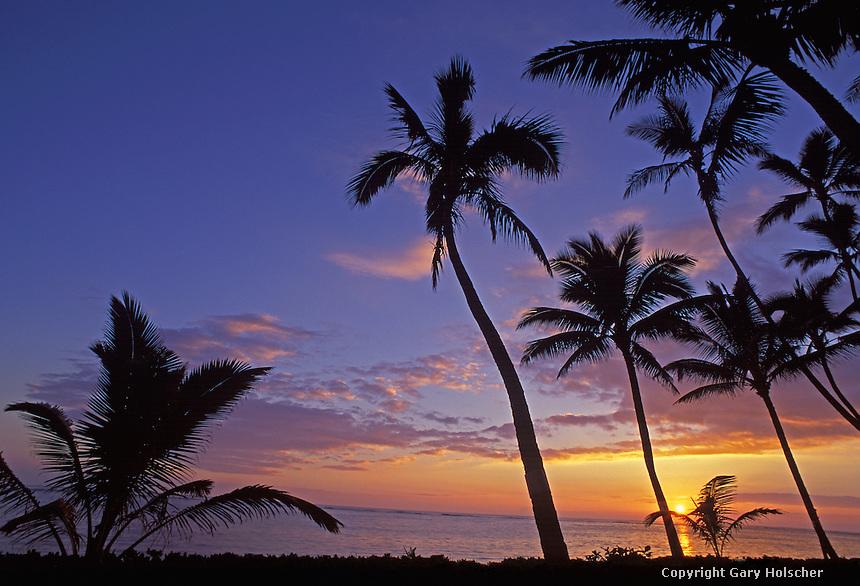 Tropical palm trees and sunrise. North Shore. Oahu, HI