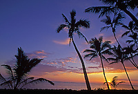 Tropical palm trees and sunrise. North Shore. Oahu, HI