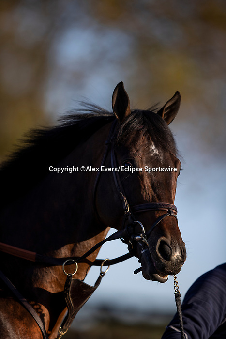 November 3, 2020: Raging Bull, trained by trainer Chad C. Brown, exercises in preparation for the Breeders' Cup Mile at Keeneland Racetrack in Lexington, Kentucky on November 3, 2020. Alex Evers/Eclipse Sportswire/Breeders Cup