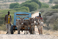 TANZANIA Meatu farmer with donkey cart / TANSANIA Meatu, Bauern mit Eselskarren
