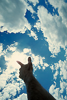Hand reaching for the clouds and pointing at the sun. Connotations - Religious, religion, spiritual. seeking help, guidance, awakening. acknowledgement.