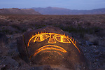 Goggle-Eyed Boulder, Three Rivers Petroglyph Site, New Mexico