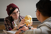 Student Elizabeth Kell learns to identify features of the human skull using models during Professor Ryan Harrod's Biological Anthropology Lab (ANTH A205L) in UAA's Beatrice McDonald Hall.