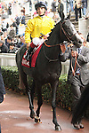 11/09/2011, Meandre, trained by André Fabre, ridden by jockey Maxime Guyon
