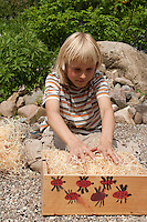 Kind bastelt eine Überwinterungskiste für Marienkäfer, Kiste wird mit Holzwolle befüllt
