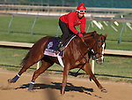 Dayatthespa, trained by Chad Brown and to be ridden by Ramon Dominguez , exercises in preparation for the 2011 Breeders' Cup at Churchill Downs on October 31, 2011.