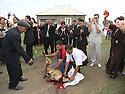Armenia 2007 <br />  A Yezidi wedding in a village : the killing of the sheep<br /> Armenie 2007 <br /> Un mariage yezidi dans un village: le sacrifice d'un mouton