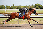 #56.Fasig-Tipton Florida Sale,Under Tack Show. Palm Meadows Florida 03-23-2012 Arron Haggart/Eclipse Sportswire.