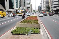 ATENÇÃO EDITOR: FOTO EMBARGADA PARA VEÍCULOS INTERNACIONAIS. SAO PAULO, 04 DE OUTUBRO DE 2012 - NOVO CANTEIRO PAULISTA -  Novo jardim do canteiro central da Avenida Paulista é visto na tarde desta quinta feira, em São Paulo. O Hospital do Coração – HCor é o responsável pelos palntio e manutencao dos novos canteiros. FOTO: ALEXANDRE MOREIRA - BRAZIL PHOTO PRESS