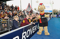 20130216 Copyright onEdition 2013©.Free for editorial use image, please credit: onEdition..Sarrie the camel with fans during thePremiership Rugby match between Saracens and Exeter Chiefs at Allianz Park on Saturday 16th February 2013 (Photo by Rob Munro)..For press contacts contact: Sam Feasey at brandRapport on M: +44 (0)7717 757114 E: SFeasey@brand-rapport.com..If you require a higher resolution image or you have any other onEdition photographic enquiries, please contact onEdition on 0845 900 2 900 or email info@onEdition.com.This image is copyright onEdition 2013©..This image has been supplied by onEdition and must be credited onEdition. The author is asserting his full Moral rights in relation to the publication of this image. Rights for onward transmission of any image or file is not granted or implied. Changing or deleting Copyright information is illegal as specified in the Copyright, Design and Patents Act 1988. If you are in any way unsure of your right to publish this image please contact onEdition on 0845 900 2 900 or email info@onEdition.com