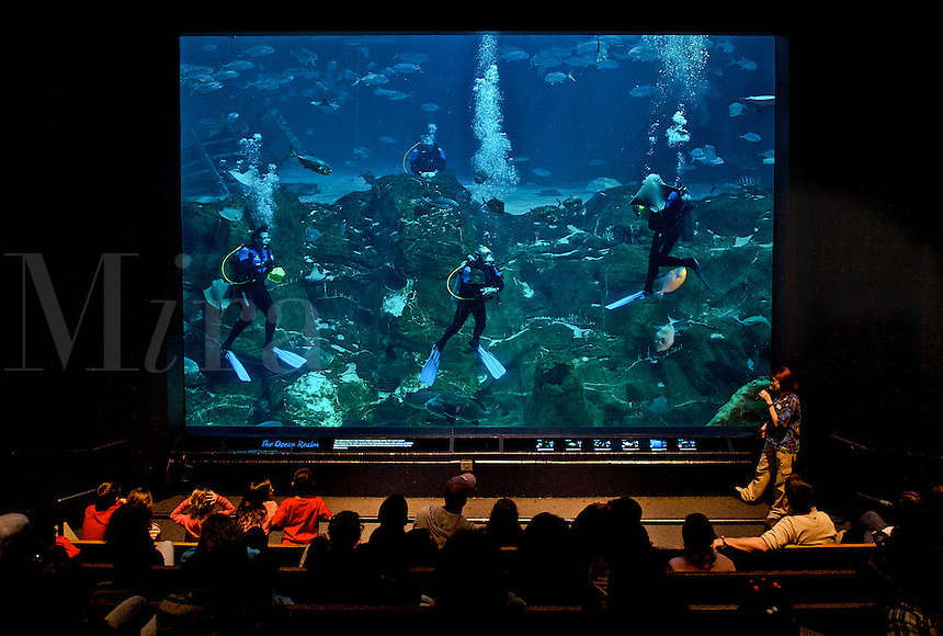 Giant saltwater tank at the New Jersey State Aquarium, Camden, Jew Jersey
