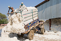 INDIA, Madhya Pradesh, Khargone, Mahima ginning factory, processing of fair trade and organic cotton, farmer supply cotton by tractor / INDIEN Madhya Pradesh , Entkernung von fairtrade und Biobaumwolle bei Mahima Fibres Ltd.