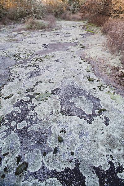 Granite outcrop with lichens, Rolesville Millpond State Park, Rolesville, North Carolina, USA