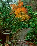 Garden Path, Japanese Maple, Cypress Garden, Mill Valley, California