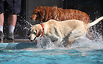 Images from the third annual Pooch Plunge at the Carson Aquatic Facility in Carson City, Nev., on Saturday, Sept. 17, 2011. The event, which raises money for Parks 4 Paws, continues Sunday with sessions at 9 a.m., 11 a.m. and 1 p.m..Photo by Cathleen Allison