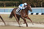 Undefeated New York-bred Agave Kiss with Ryan Curatolo easily win the Grade III Cicada Stakes for 3-year old fillies, at 6 furlongs. Trainer Rudy R. Rodriguez.  Owner Flying Zee Racing Stable.