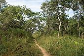 Xingu Indigenous Park, Mato Grosso State, Brazil. Path to the port of Aldeia Lahatua.