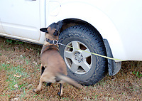 Marc Hayot/Herald Leader K9 Duke locates drugs in the wheel well of an abandoned truck.