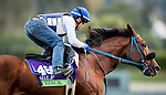 ARCADIA, CA - OCTOBER 29: Vyjack, owned by Pick Six Racing and trained by Philip D'Amato, exercises in preparation for the Breeders' Cup Mile at Santa Anita Park on October 29, 2016 in Arcadia, California. (Photo by Alex Evers/Eclipse Sportswire/Getty Images)