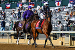 November 7, 2020 : Circus Maximus is escorted to the starting gate before the FanDuel Mile presented by PDJF on Breeders' Cup Championship Saturday at Keeneland Race Course in Lexington, Kentucky on November 7, 2020. Jessica Morgan/Breeders' Cup/Eclipse Sportswire/CSM