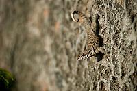 Lizard on wall. Santiago del Cuba. 7-12-10