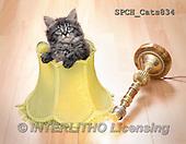 Xavier, ANIMALS, REALISTISCHE TIERE, ANIMALES REALISTICOS, cats, photos+++++,SPCHCATS834,#A#