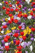 Gisela, FLOWERS, BLUMEN, FLORES, photos+++++,DTGK1992,#f#