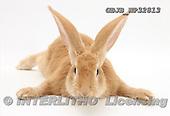 Kim, ANIMALS, fondless, photos, GBJBWP32813,#A# Tiere ohne Fond, animales sind fondo