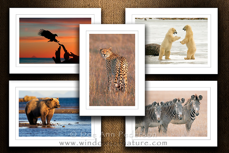 """Collection II<br /> Limited Edition Images Now Available On Beautiful Note Cards<br /> Boxed Collection Set<br /> Size: 5""""x7""""<br /> Printed on FSC Certified Paper using environmentally friendly vegetable & soy based inks.<br /> 120# Matt Card Stock<br /> Beveling Around Image<br /> Clear Foil Treatment Over Image For Real Photo Look<br /> Blank Inside For Your Personal Message<br /> Back Features Photo Caption & Artist Bio"""