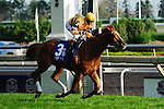 Wise Dan (3) with jockey John Valazquez rides to victory in the Canadian Stakes (Grade I) race  at Woodbine Race Course in Ontario, Canada on September 16, 2012.