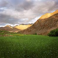 Crops growing in Ladakh region of Indian Himalayas, near to the Lama Yuru Monastery, Ladakh, India
